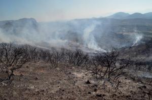 Ηλεία: Δυο φωτιές και έρευνες για… εμπρηστές