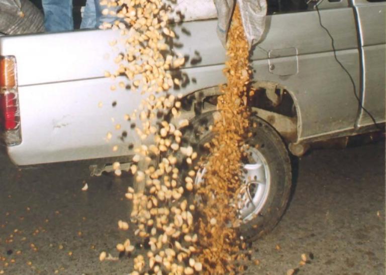 Επτά άνθρωποι κατάφεραν να κλέψουν έξι τόνους αμύγδαλα στη Μαγνησία! | Newsit.gr