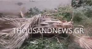 Θεσσαλονίκη: Εργαζόμενος του Δήμου Καλαμαριάς καταπλακώθηκε από δέντρο [vid]