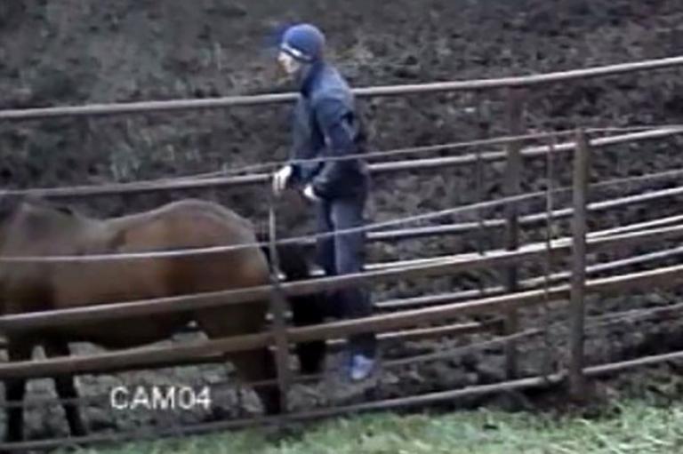 Είδε σε βίντεο τον σύντροφο της να βιάζει… φοράδα! [pics]   Newsit.gr