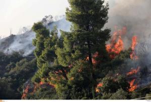 Μεγάλη φωτιά σε δύσβατη περιοχή στην Εύβοια