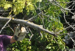 Καλάβρυτα: Σκοτώθηκε 22χρονος προσπαθώντας να μαζέψει καρύδια!