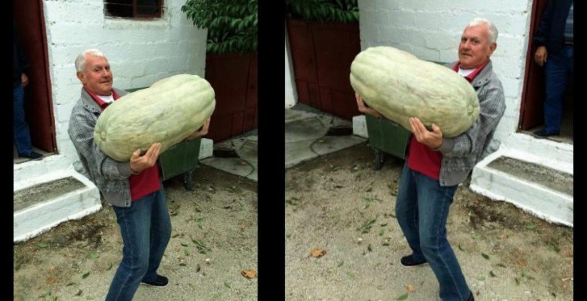 Κολοκύθα για… Γκίνες στα Τρίκαλα – Ζυγίζει 50 κιλά! [pics] | Newsit.gr