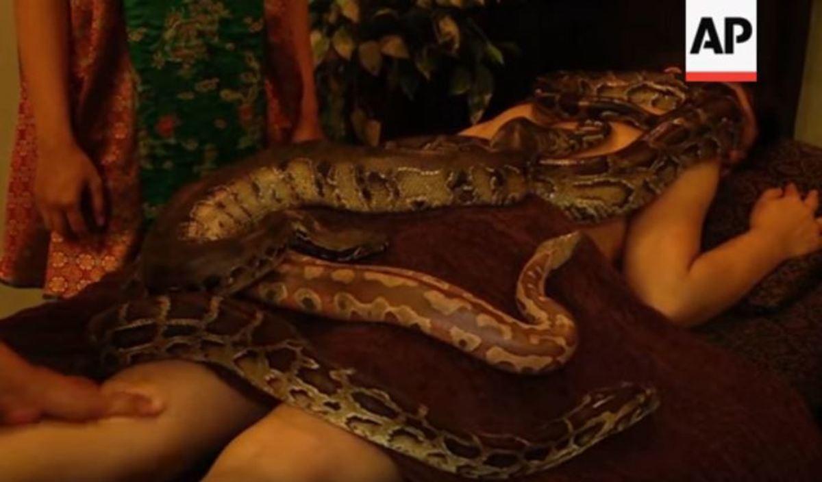 Πιο χαλαρωτικό δεν γίνεται! Μασάζ με φίδια… | Newsit.gr