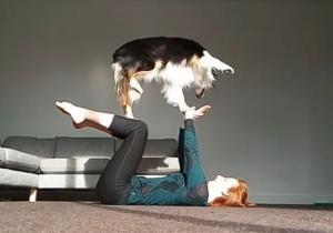Γνωρίστε τον σκύλο μάστερ της γιόγκα!