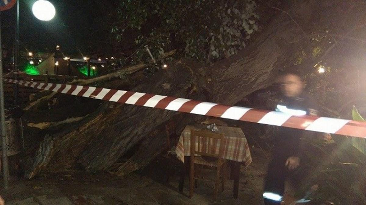 Πήλιο: Τρόμος στην Πορταριά από την κατάρρευση μεγάλου πλατάνου – Μια γυναίκα τραυματίας | Newsit.gr