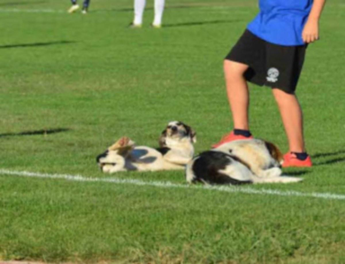 Αργολίδα: Οι πιο… ποδοσφαιρόφιλοι σκύλοι και τα απρόοπτα κατά τη διάρκεια αγώνα [pics] | Newsit.gr