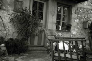 Πύργος: Έζησε επί 3 ημέρες πεσμένη στο πάτωμα του σπιτιού της – Συγκίνηση για την ανήμπορη γριούλα!