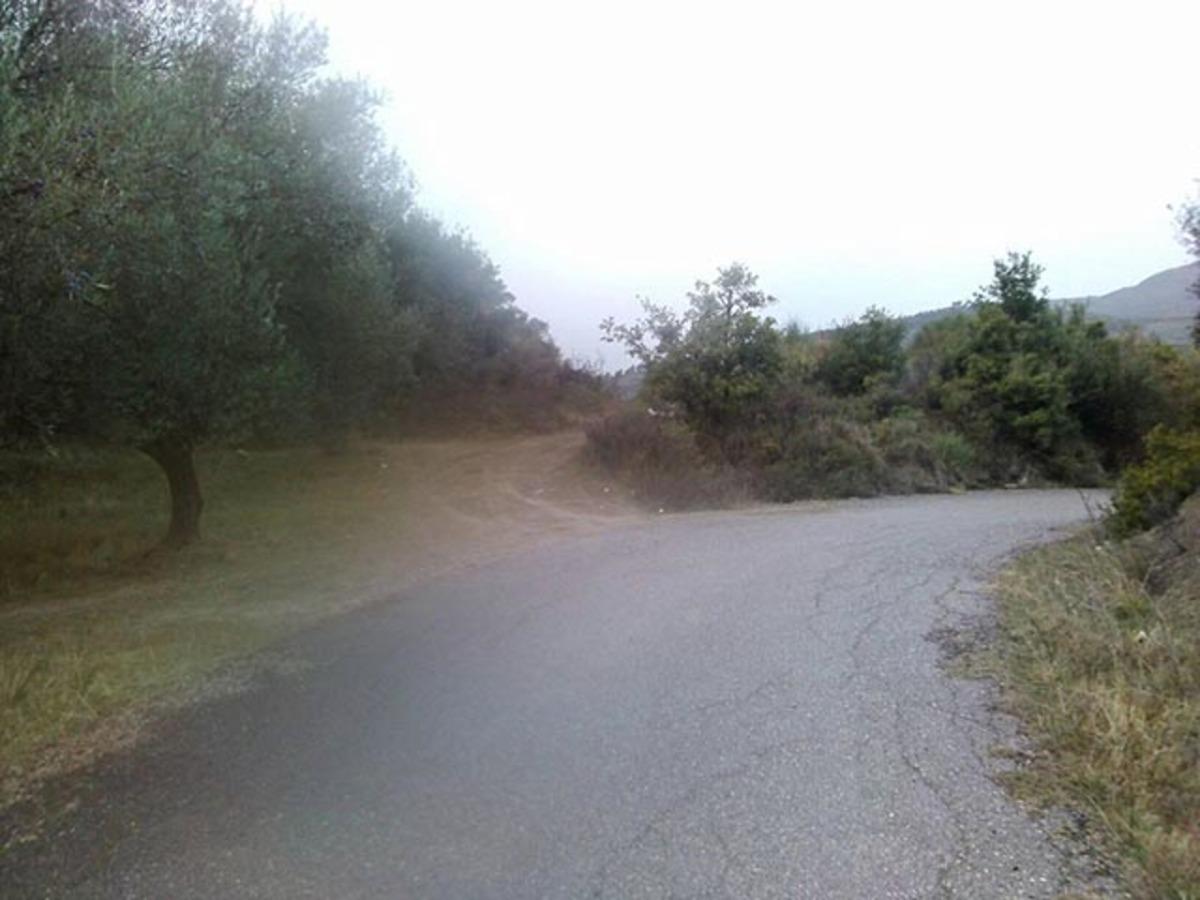 Αγρίνιο: Πήγε να μαζέψει ελιές και είδε στο χωράφι του αυτές τις εικόνες που θα θυμάται για πάντα [pics] | Newsit.gr