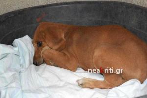 Κρήτη: Αυτή είναι η μικρή Πάιπερ που έζησε εγκλωβισμένη σε αγωγό επί ένα μήνα – Η εκπληκτική σκυλίτσα [pics, vid]