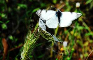 Ρόδος: Μια ξεχωριστή ανακάλυψη στην Κοιλάδα των Πεταλούδων! [pic]
