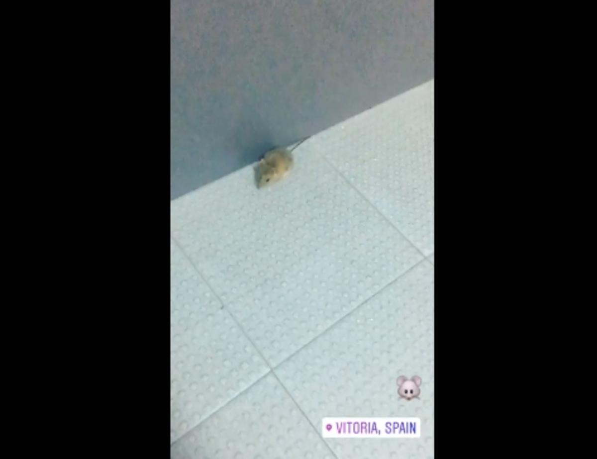 Παναθηναϊκός - ποντίκι