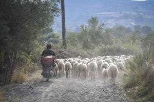 Ασύλληπτη τραγωδία στη Λέσβο – Ένας νεκρός, 5 τραυματίες σε τροχαίο με πρόβατα!