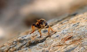 Κρήτη: Θρήνος για τον 30χρονο που πέθανε από τσίμπημα σφήκας – Σήμερα η κηδεία του