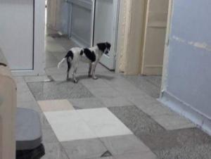 Κιλκίς: Μέσα στο νοσοκομείο άγρια σκυλιά – Δάγκωσαν γιατρό και νοσηλευτές μπροστά σε ασθενείς [pics]