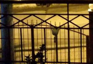 Θεσσαλονίκη: Ξύπνησε μετά τα μεσάνυχτα και είδε από το μπαλκόνι του σπιτιού αυτές τις εικόνες [pics]
