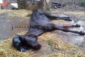 Κολαστήριο στο Ρίο – Νεκρά και υποσιτισμένα ζώα – Εικόνες ντροπής [pics, vids]