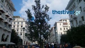 Θεσσαλονίκη: Αυτή είναι η «βελανιδιά της ζωής» που φυτεύτηκε στην πλατεία Αριστοτέλους [pic, vids]