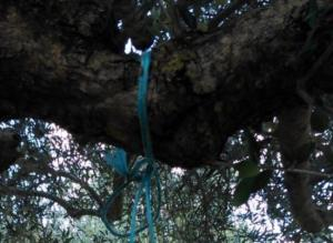 Κρήτη: Αδιανόητη κτηνωδία στο Ηράκλειο με σκληρές εικόνες – Κρέμασαν σκύλο από δέντρο σε χωράφι [pics]