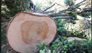 Λαμία: Τραγικός θάνατος για 53χρονο οικογενειάρχη – Τον καταπλάκωσε δέντρο