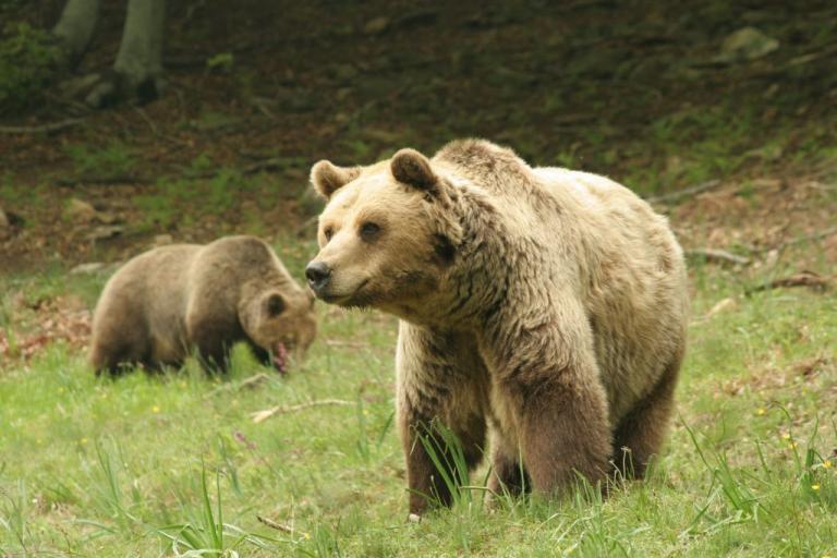 Πέθανε σε βαθιά γεράματα ο Μήτσος – Ο «δραπέτης» αρκούδος του Αρκτούρου [pics]