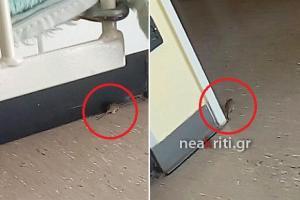 Ηράκλειο: Ασθενείς και ποντίκια – Εικόνες που σοκάρουν στην παιδιατρική κλινική του ΠΑΓΝΗ [pics]