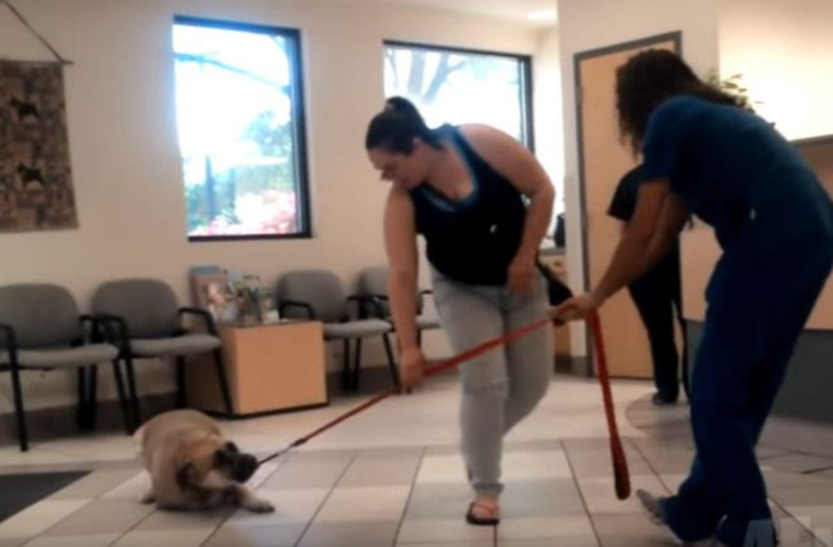 Τρομαγμένα σκυλιά προσπαθούν μάταια να αποφύγουν τον κτηνίατρο…