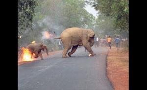 Ελεφαντάκι με τη μαμά του δίνουν μάχη με τις φλόγες