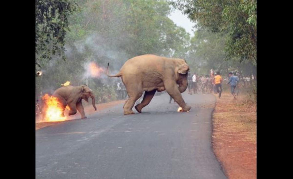 Ελεφαντάκι με τη μαμά του δίνουν μάχη με τις φλόγες | Newsit.gr