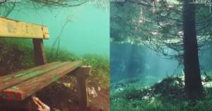 Αυτό το δάσος βρίσκεται κάτω από την επιφάνεια της θάλασσας