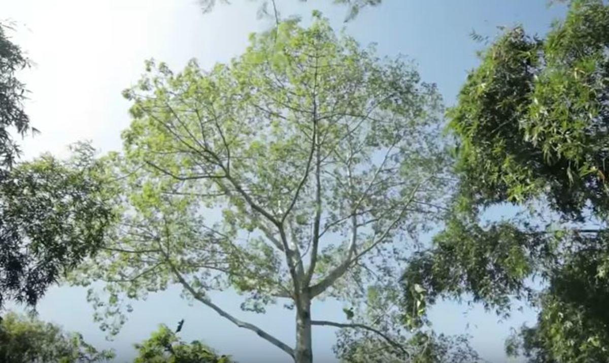 Κάθε μέρα φύτευε στο ίδιο μέρος ένα δέντρο – Σήμερα είναι δάσος | Newsit.gr