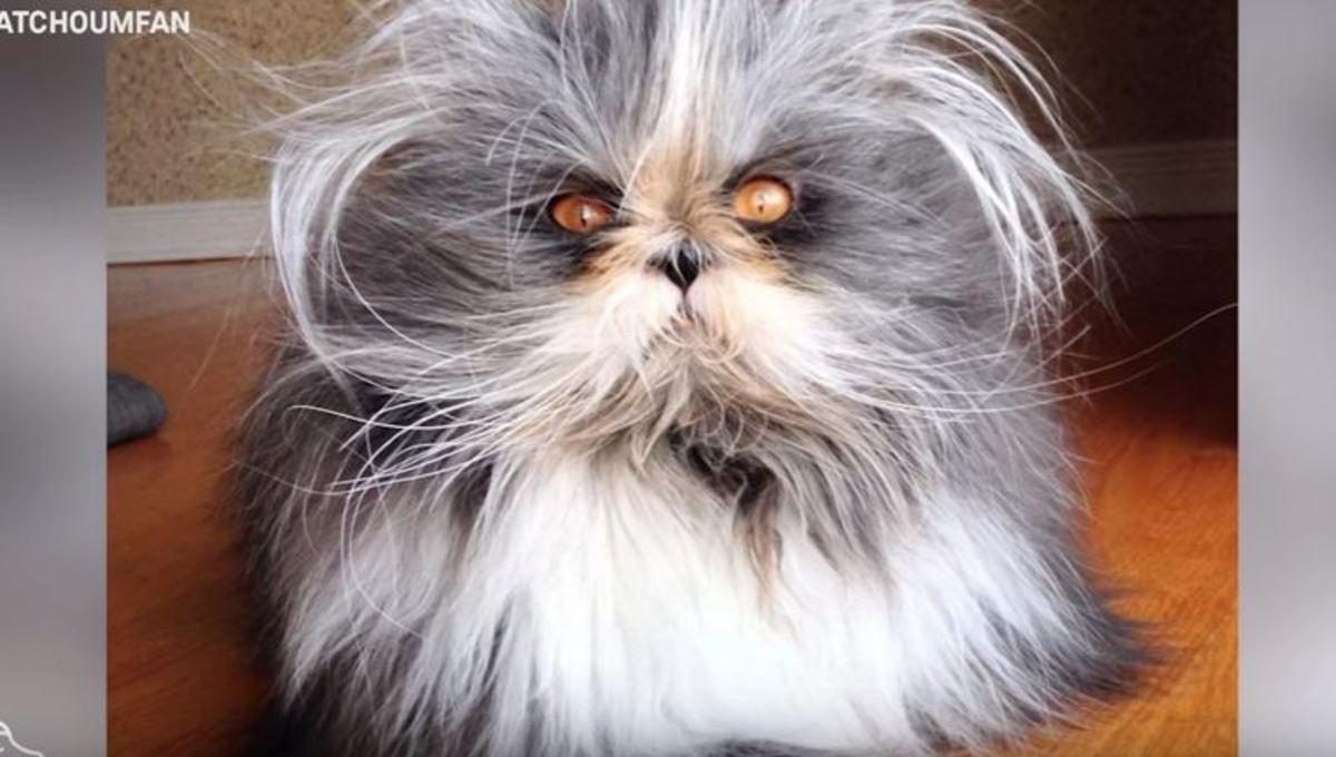 Η πιο χνουδωτή γάτα του κόσμου έχει το «σύνδρομο του λυκανθρώπου» | Newsit.gr