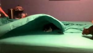 Έχει 3 γάτες σπίτι της και προσπαθεί μάταια να φτιάξει το κρεβάτι