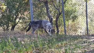 Ο Αρκτούρος «υιοθέτησε» δύο λύκους από τη Σερβία [pics]