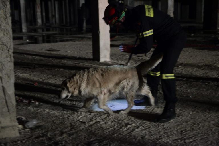Μαγνησία: Βρέθηκε νεκρός ο κυνηγός που είχε εξαφανιστεί | Newsit.gr