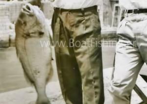 Εύβοια: Αυτή είναι η μεγαλύτερη τσιπούρα που πιάστηκε στη Χαλκίδα – Η… ασπρόμαυρη ιστορία της [pics]