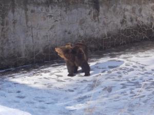 Επιχείρηση απεγκλωβισμού αρκούδας από άδεια υδατοδεξαμενή στο Νευροκόπι [pics]
