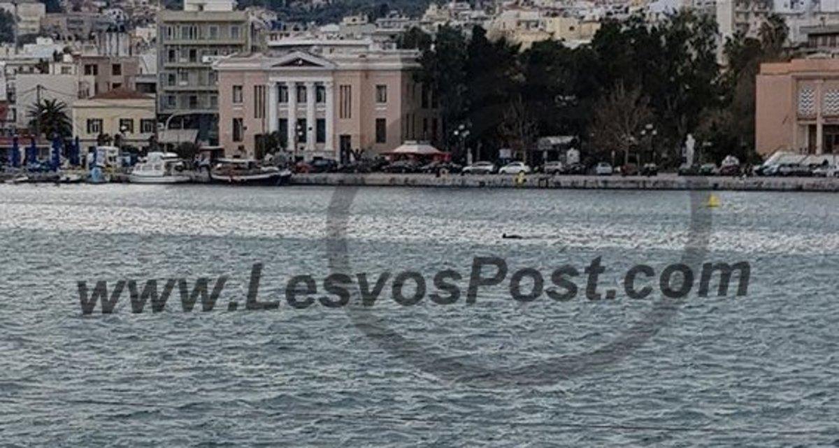 Μυτιλήνη: Κοιτούσαν τη θάλασσα και ξαφνικά είδαν μπροστά τους αυτές τις εικόνες [pic, vid] | Newsit.gr