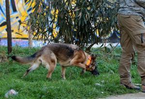 Κρήτη: Έβγαλε βόλτα το σκυλάκι του και βρέθηκε τραυματισμένος στο δρόμο