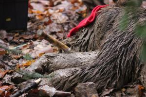Κοζάνη: Λύθηκε το μυστήριο για τη νεκρή αρκούδα – Την πυροβόλησαν με κυνηγετικό όπλο!