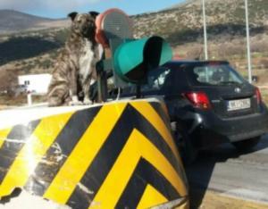 Κοζάνη: Αυτός είναι ο σκύλος… φύλακας των διοδίων στον Πολύμυλο – Η θέση που του αρέσει [pics]