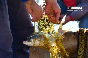 Αργολίδα: Σήκωσε τα δίχτυα και είδε αυτές τις εικόνες – Ο ψαράς προσπαθούσε να πιστέψει στα μάτια του [pics, vid]