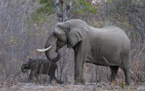Κίνα: Τρόμος από πεινασμένο ελέφαντα που μπούκαρε σε χωριό