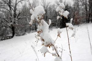 Τραγωδία στο Αίγιο: Θαμμένη στο χιόνι βρέθηκε ηλικιωμένη που είχε εξαφανιστεί!