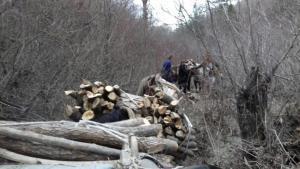 Καστοριά: Φόρτωσαν πέντε άλογα με παράνομα υλοτομημένη ξυλεία δύο Αλβανοί