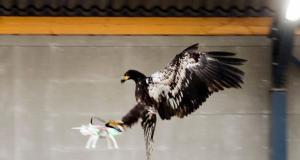 Μαζικές απολύσεις… αετών και αρουραίων από την Ολλανδική αστυνομία – Δεν ήταν υπάκουα!