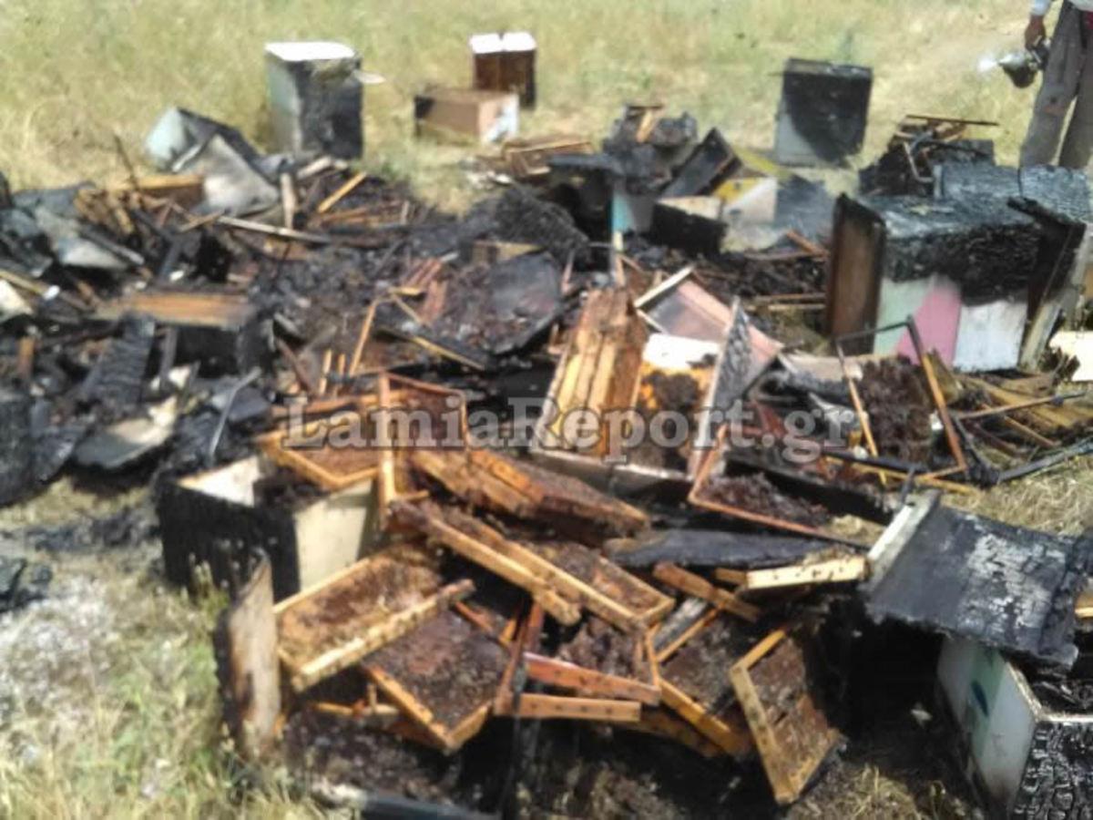 Φθιώτιδα: Έπιασαν τον «μανιακό» που έκαιγε μελίσσια | Newsit.gr