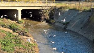 Θεσσαλονίκη: «Ελλιπείς» οι εργασίες στο ρέμα Δενδροποτάμου