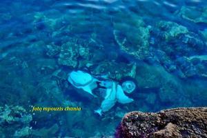 Χανιά: Χειμερινή… βουτιά για βέσπα στο Ενετικό Λιμάνι [pics]