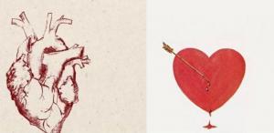 Γιατί το σχήμα της καρδιάς που χρησιμοποιούμε είναι τόσο λάθος ανατομικά